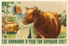 Attention And Care Good Cattle USSR
