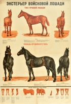Military Horse Breeds Red Army